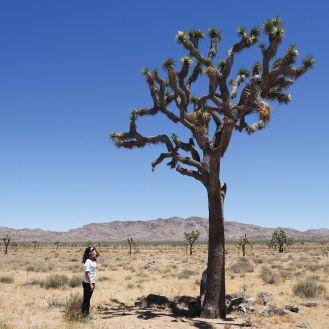 joshua tree2
