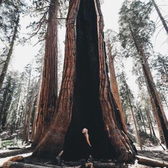 sequoia national park 2