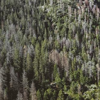 sequoia national park 3