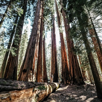 sequoia national park4
