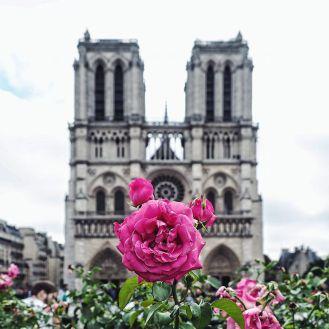 Cathedrale Notre dame de paris 2