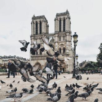 Cathedrale Notre dame de paris 3